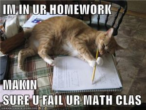 cat homework meme